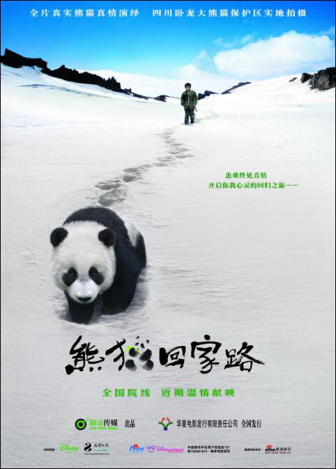 Trail of the Panda